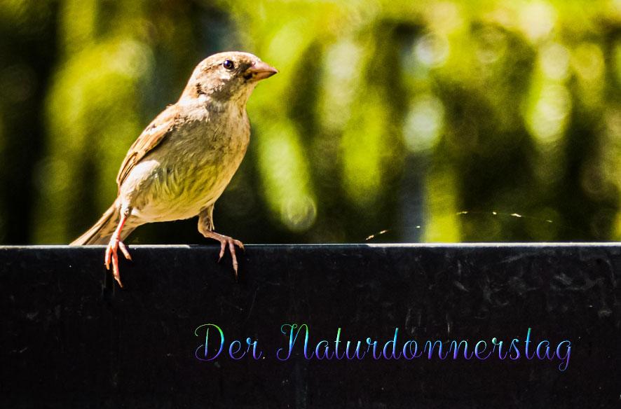 DND – Gartentag