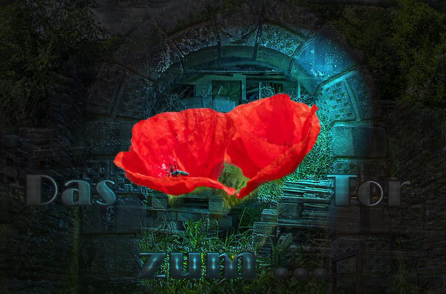 """Das """"Tor"""" zum roten Mohn"""