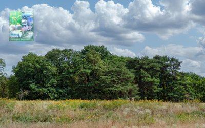 Düne und Bäume = Schwanheim
