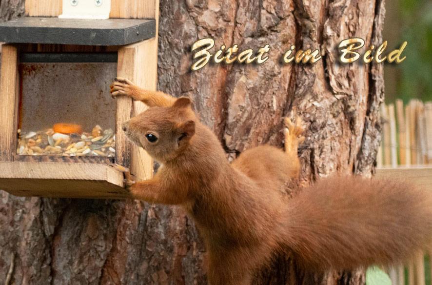 Zitat im Bild mit Hörnchen