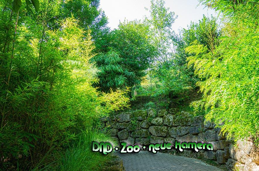 DND – Zoo – Neue Kamera