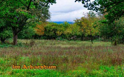 Arboretum mit der Neuen