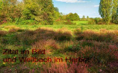 Ein ZiB aus Weilbach