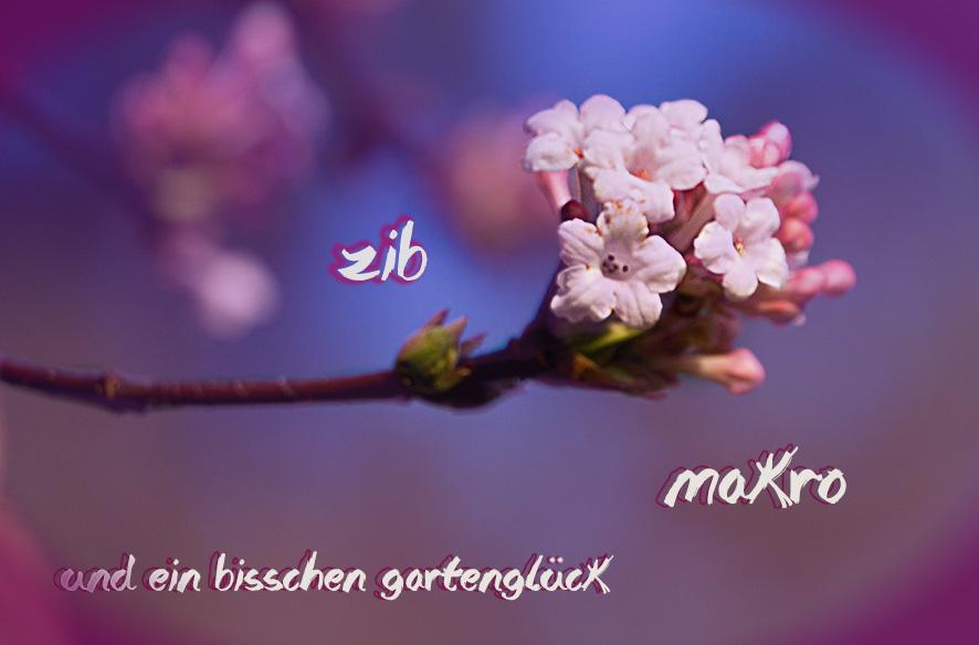 ZiB & Blüten