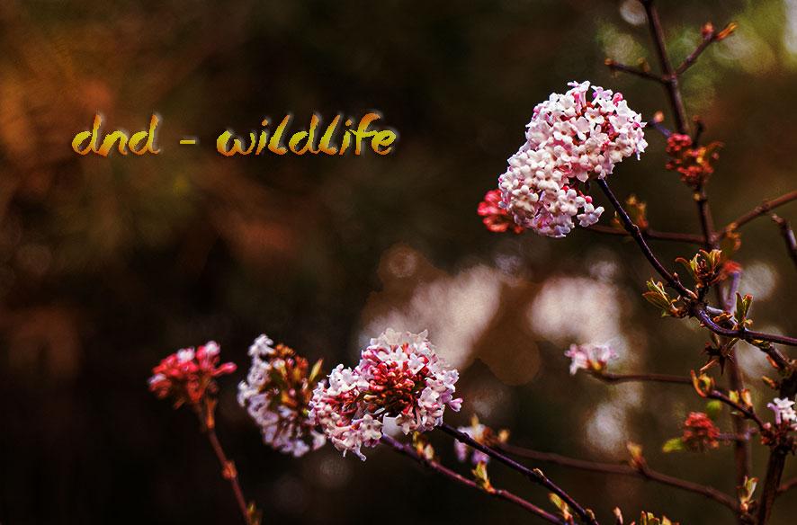 DND – Wildlife im Garten
