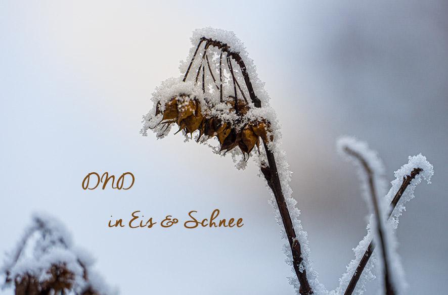 DND in Eis & Schnee