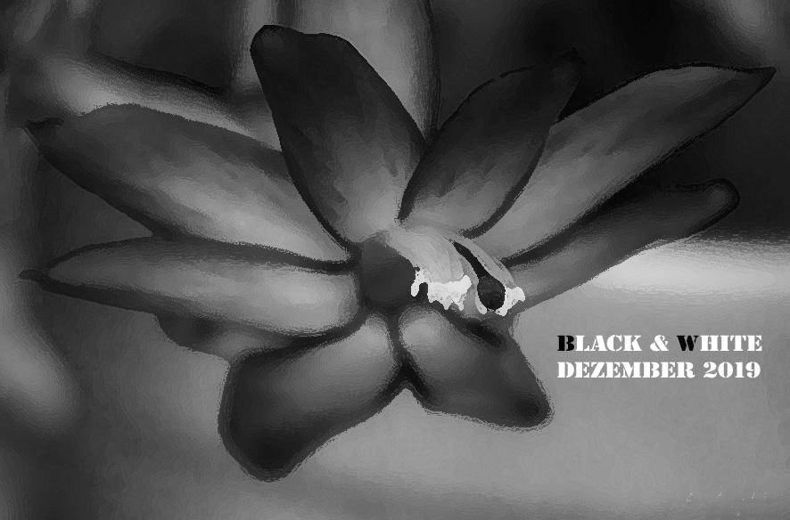 Black & White 12 / 2019