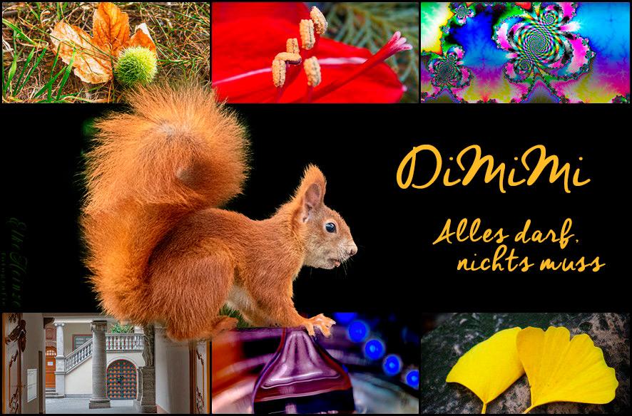 DiMiMi – der Erste 2020