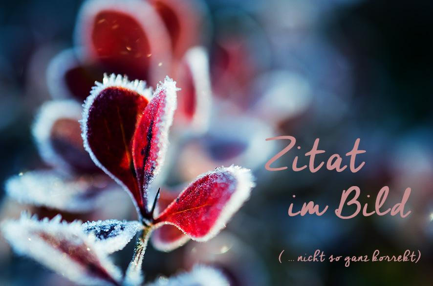 (Z)iB mit Haiku