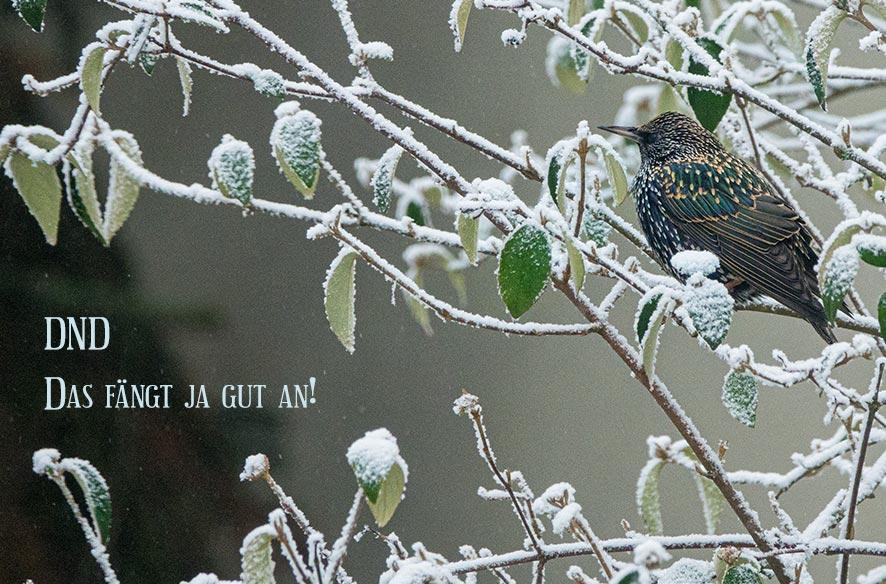 DND – Zwischen Sonne & Schnee