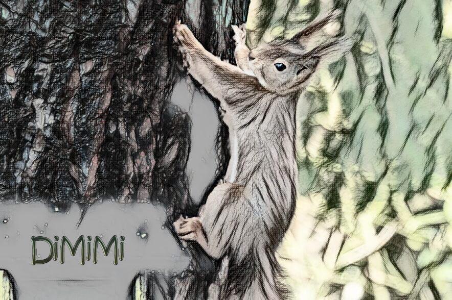 DiMiMi – der Sechste