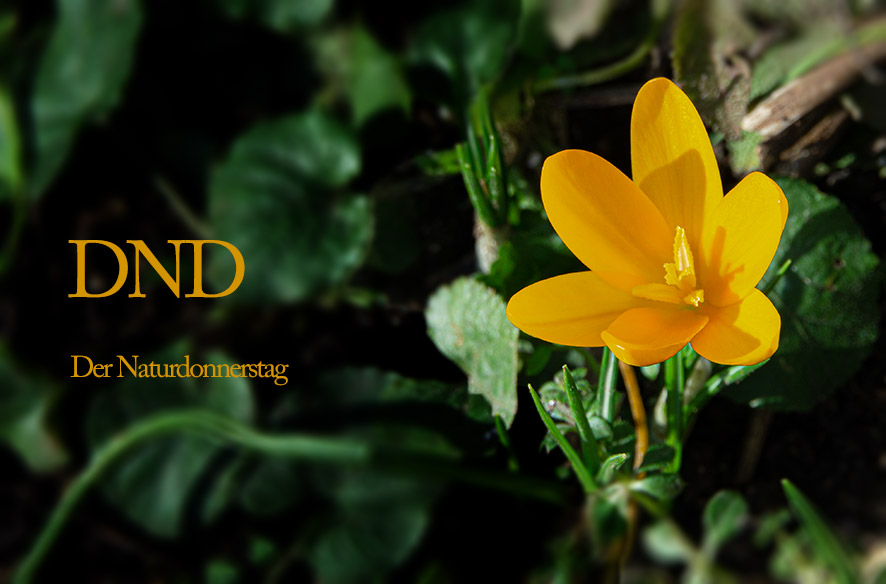 DND – Frühling im Februar
