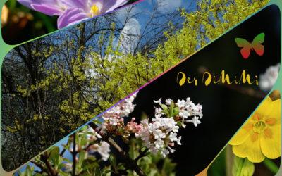 Frühlings-DiMiMi