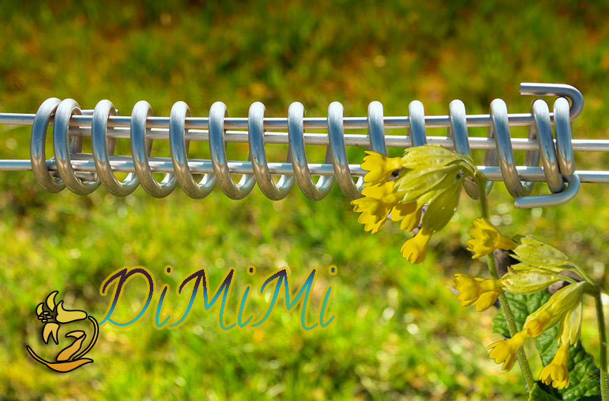 DiMiMi – ganz ohne Aprilscherz