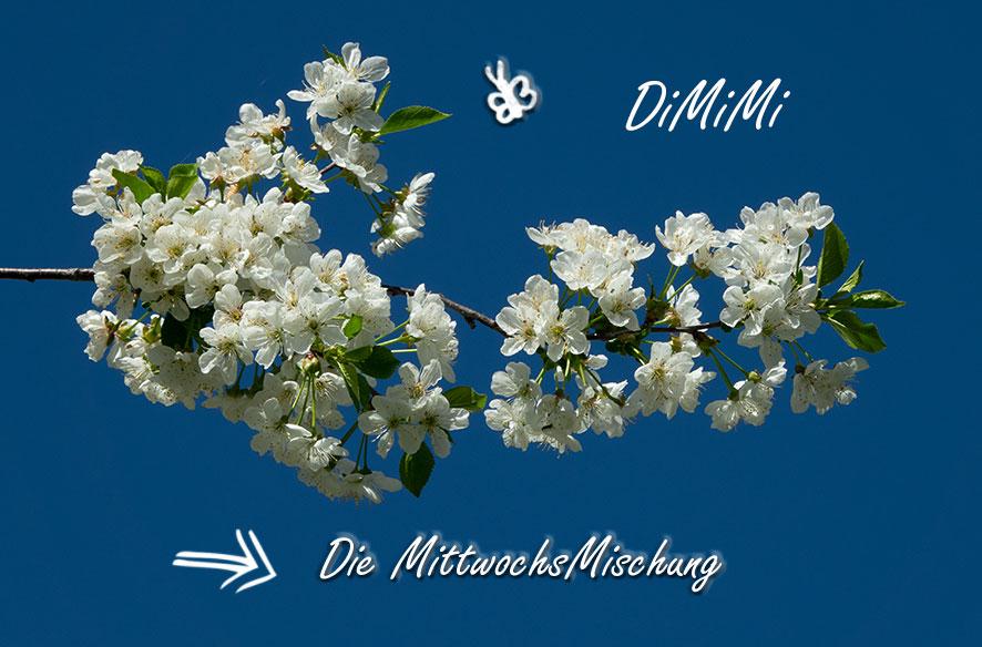 DiMiMi nach Ostern