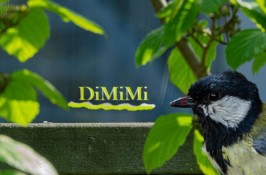 DiMiMi-04-22 und Danke