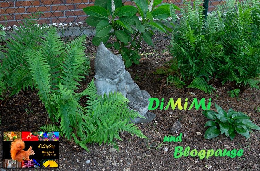 DiMiMi & Pause