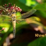 Tag 8 - Libellenschlupf