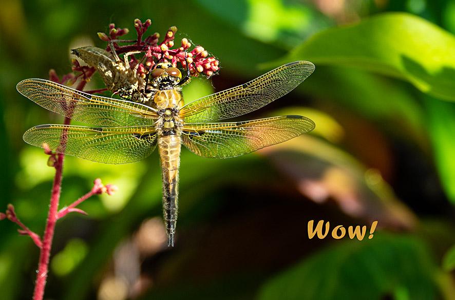 Tag 8 – Libellenschlupf