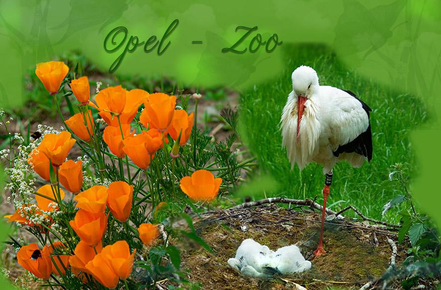Viel los im Opel-Zoo