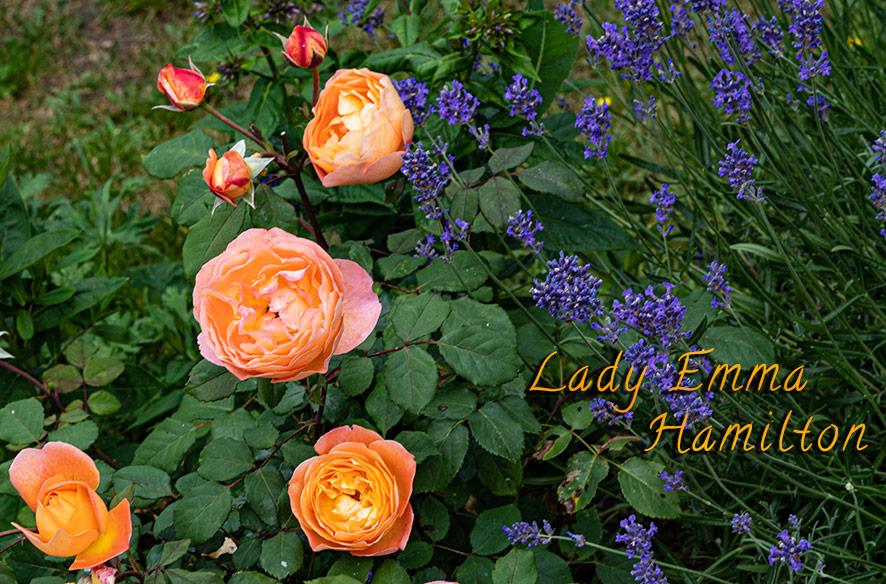 Lady Emma & die Nymphe