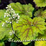 Gartenglück Blattschmuckstauden