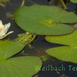 Weilbach - Am Wasser