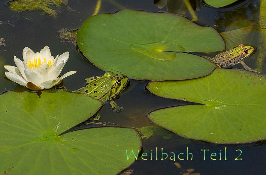 Weilbach – Am Wasser
