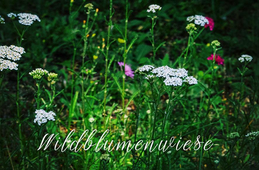 Wildblumen & Wetter