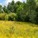 Vom Stadtpark zur Nidda