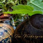 Von Schnecken, Wespen und Rückenschwimmern