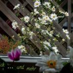 Freitagsblümchen & mehr