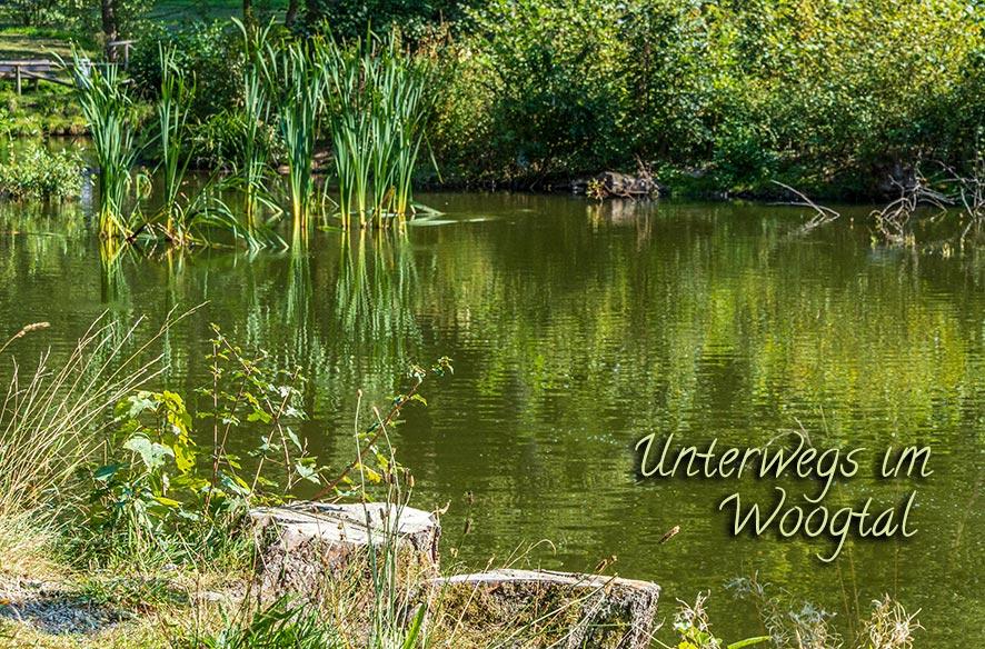 Wald & Wasser = Woogtal