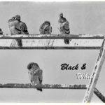 Black & White - Oktober 2020