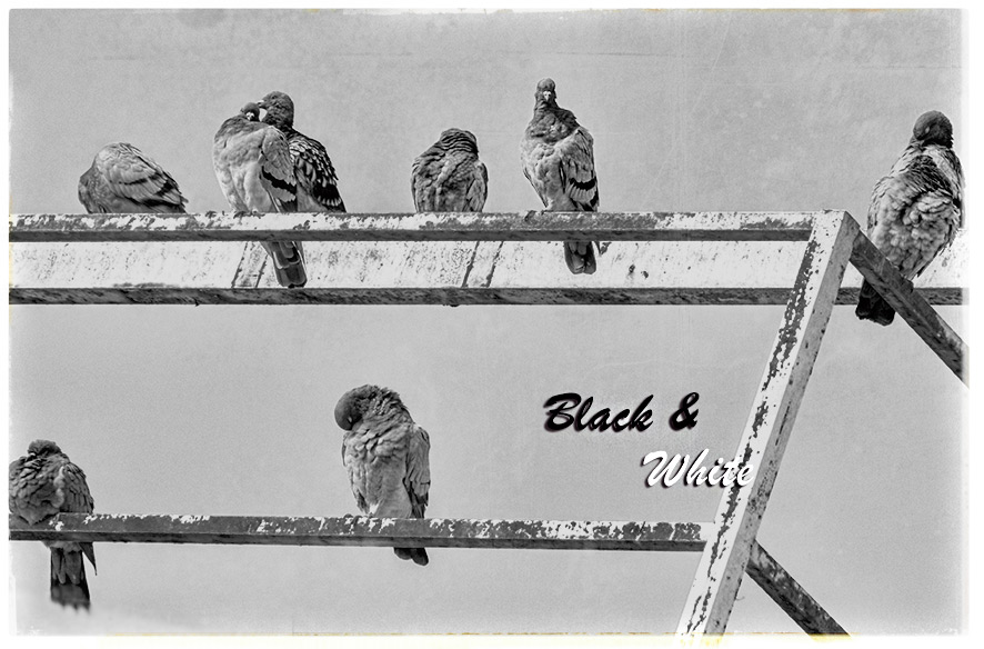 Black & White – Oktober 2020