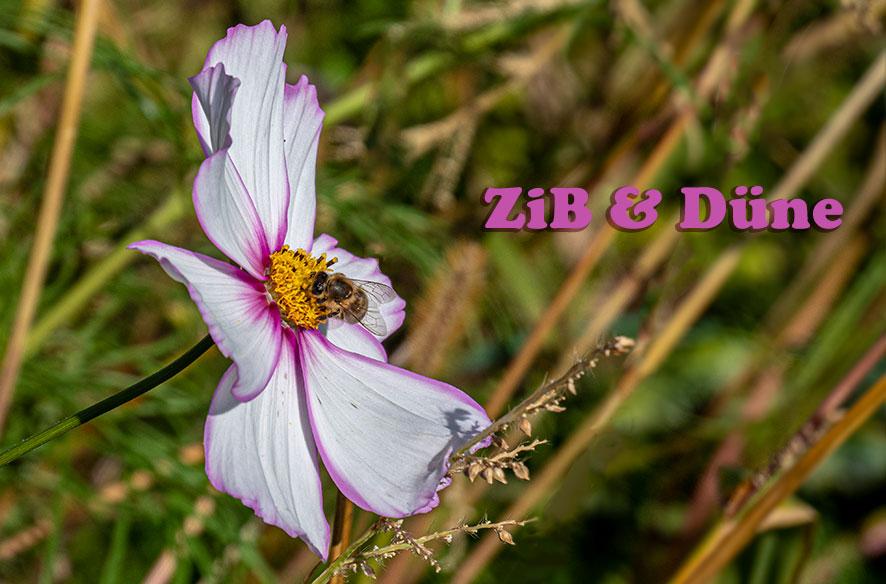 Zitat im Bild & letzte Blüten