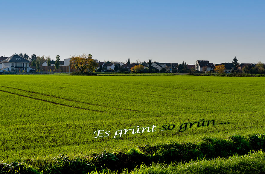 """Mit viel Grün & """"T"""" in die neue Woche"""