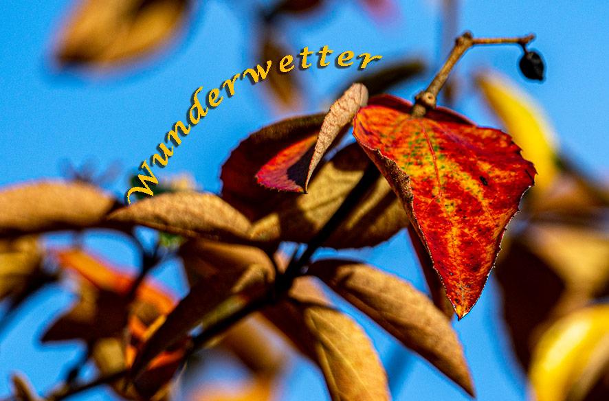 Novemberwunderwetter