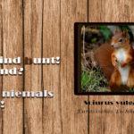 DND - Die Sache mit den Eichhörnchen