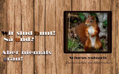 DND – Die Sache mit den Eichhörnchen