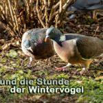 ZiB & Wintervögel