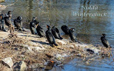Winterglück an der Nidda