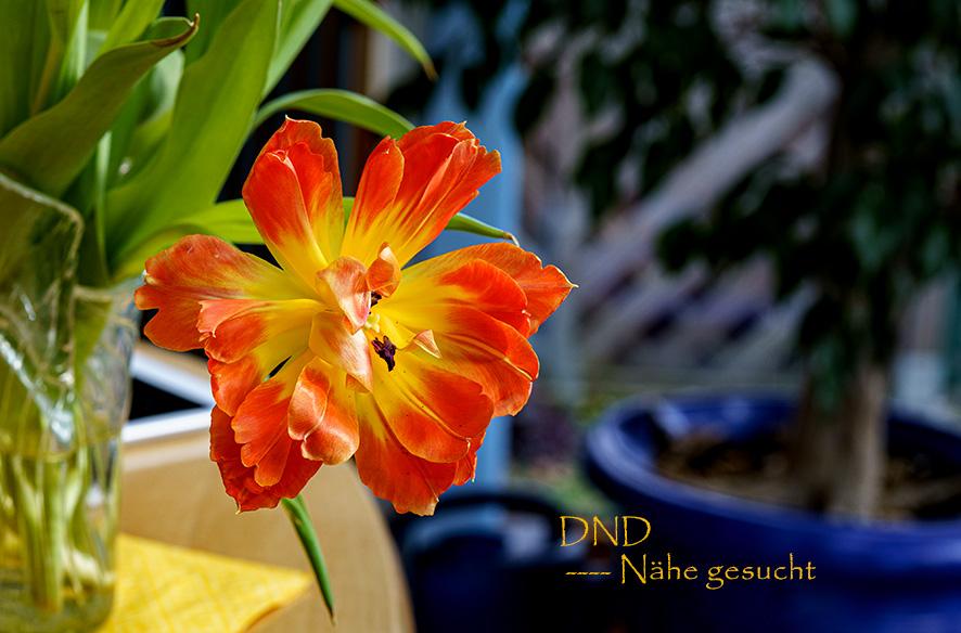 DND – Ferne vs. Nähe
