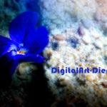 Digi-Art mit Veilchen & ...