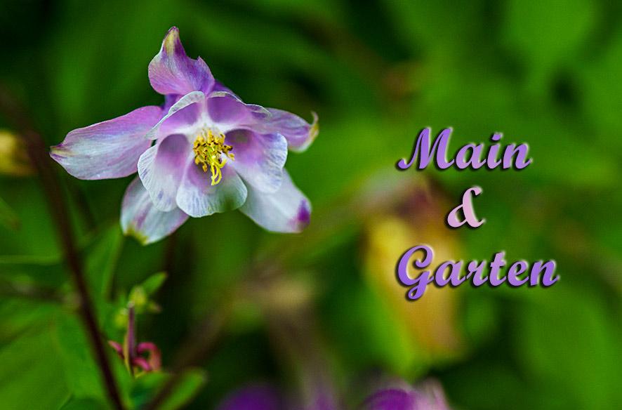 Zwischen Main und Gartenglück
