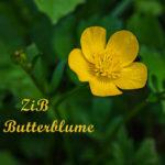 ZiB & Gartentag