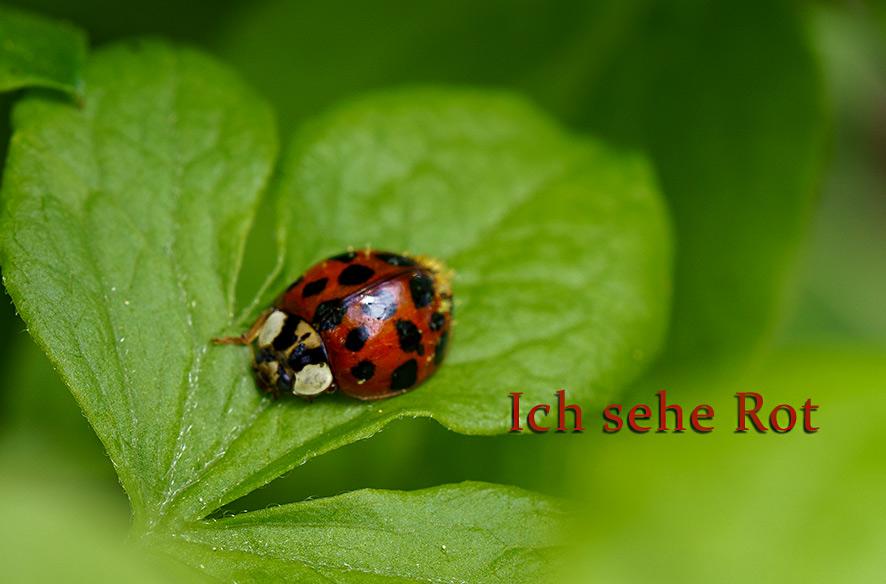 "Projekt ""Ich sehe rot"" 3/2021"