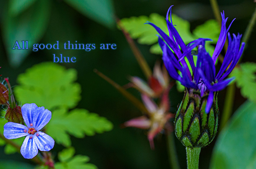 All good things are blue #4