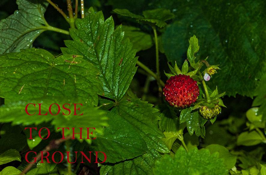 Close to the ground – Abendstimmung