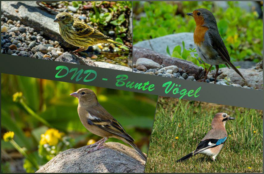 DND – Bunte Vögel
